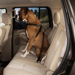 Dogs Dog Safety Harness Auto Car Seat Belt Large New
