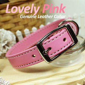 Luxury and Cute Dog Collar Lovely Pink Genuine Leather w Retractable Leash