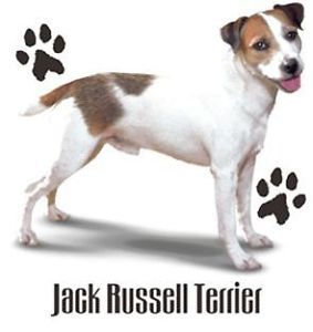 Jack Russell Terrier Puppy Dog with Paw Prints White T Shirt $9 95