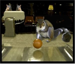 Squirrel Bowling Odd Fun Garage Refrigerator Toolbox Magnet