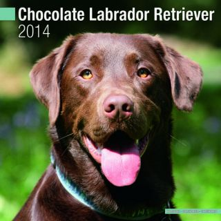Chocolate Labrador Retriever Wall Calendar 2014