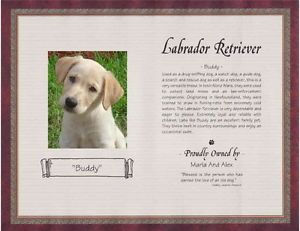Personalized Any Breed Pet Memorial Poem Story Labrador Retriever 6 Designs