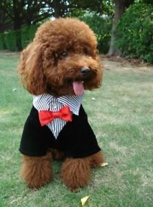 Fordogs Pet Dog Clothes Puppy Costume Apparel Western Style Men's Suit Bow Tie