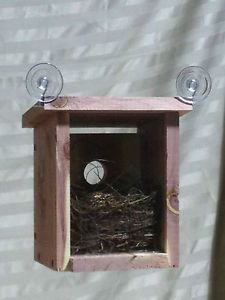 Window Birdhouse View Nest Babies Educational Made with Natural Red Cedar